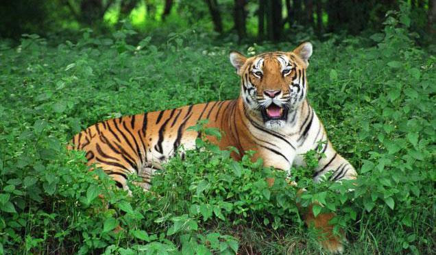 similipal reserve forest mayurbhanj, odisha