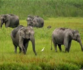 chandaka elephant reserve forest, khurda