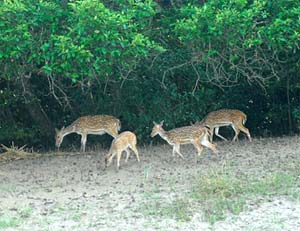 odisha wild life deers